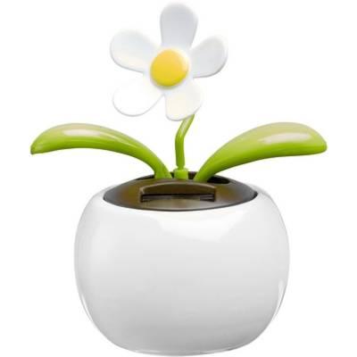 Solar-Blume Blumberg