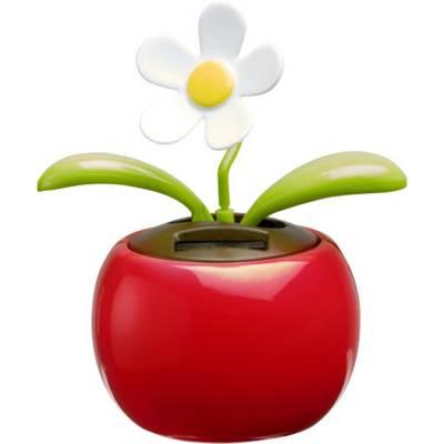 Solar-Blume Templeogue-rot