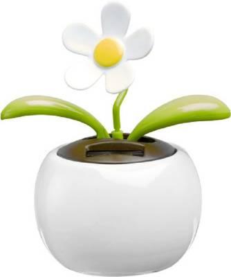 Solar-Blume Templeogue